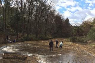 寒波が来たので冬期湛水している田んぼは厚い氷に覆われました。
