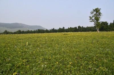 物凄い密度のお花畑。これが自然に存在することに驚きです。