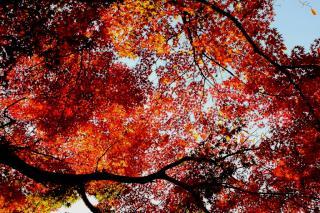 20131130_inokashira8.JPG