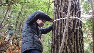 houga_forest%20%2813%29.jpg